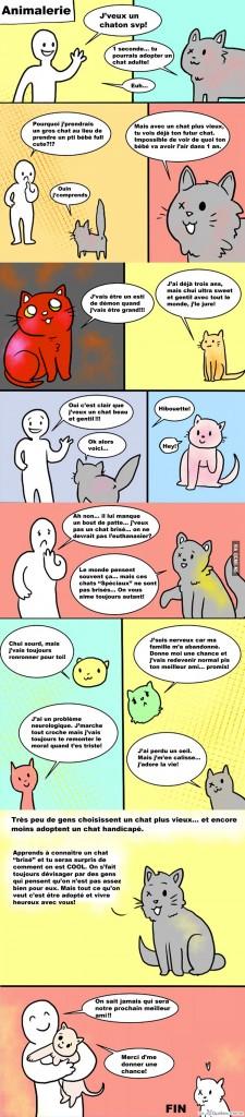 Avant d'adopter