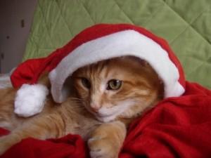 Un Noël pour les chats de l'Association