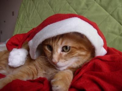 Un no l pour les chats de l 39 association la maison des chats oise - Image de chat de noel ...